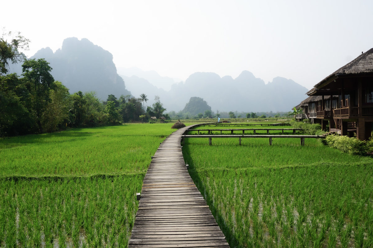 a walkway over green rice fields with mountains in Laos