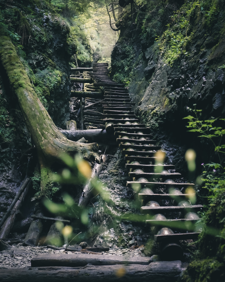 Wooden ladder in nature paradise