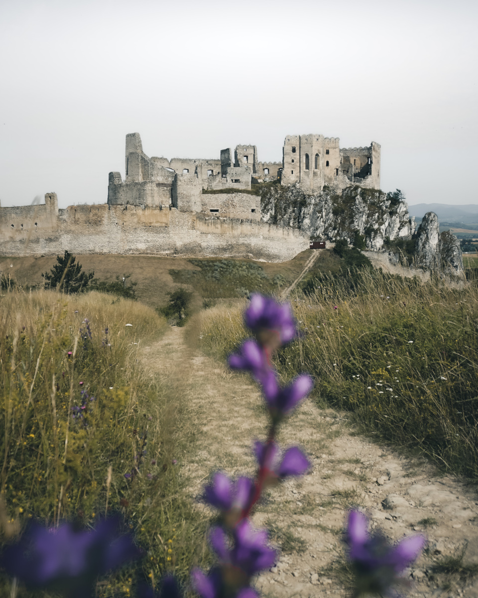 Purple flowers at viewpoint of Beckov Castle