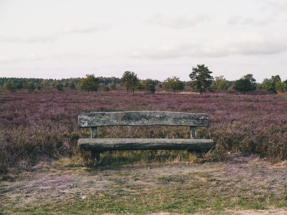 Wooden bench in front of a heathland