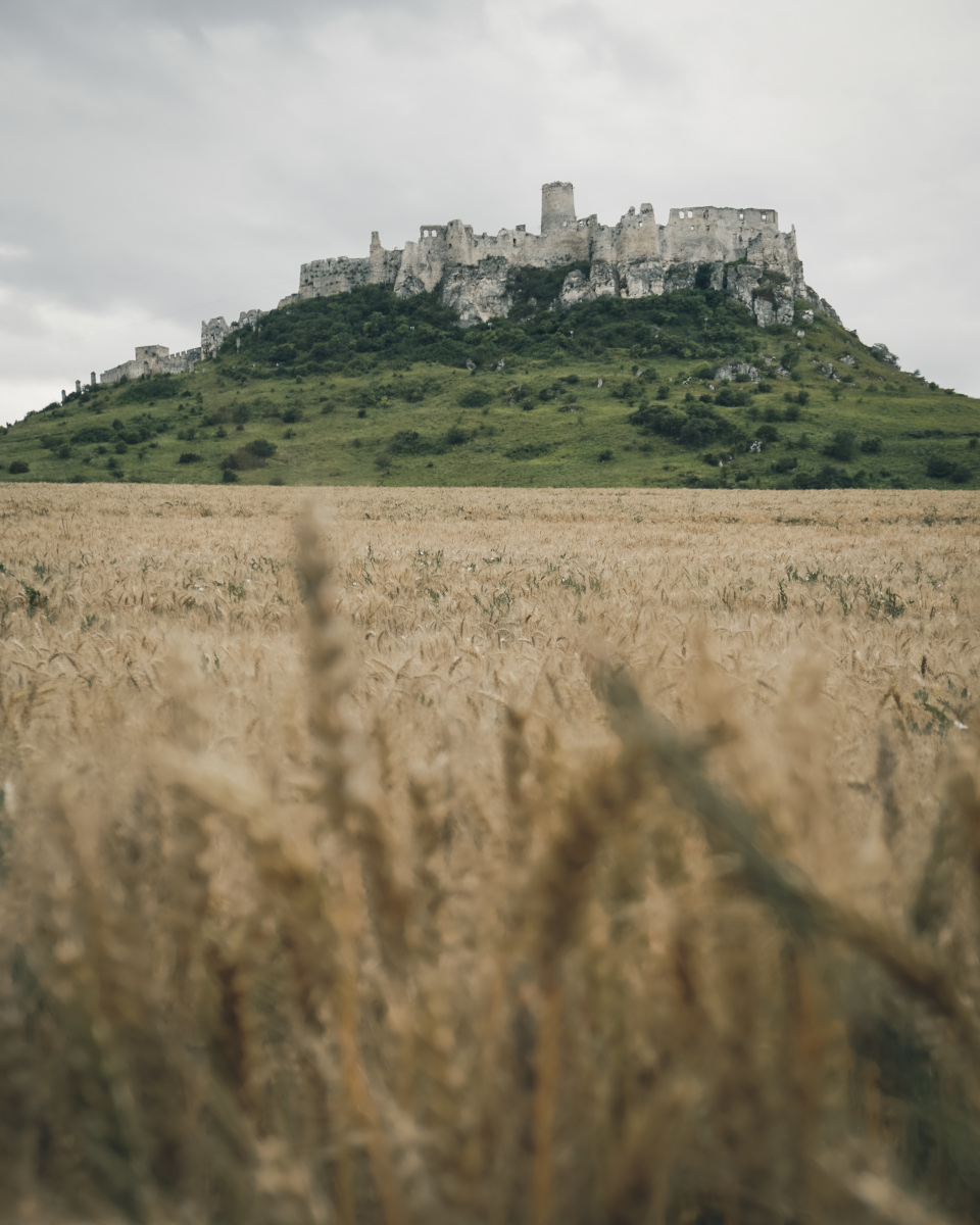 Corn field and Spis Castle