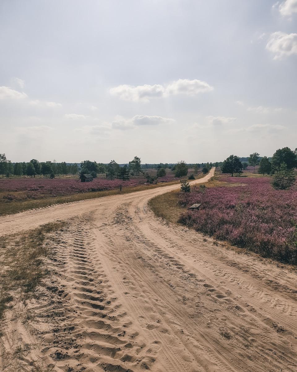 sand path in the Osterheide