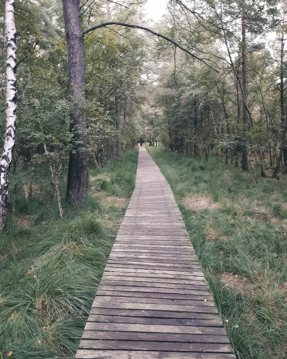 Wooden path through a forest