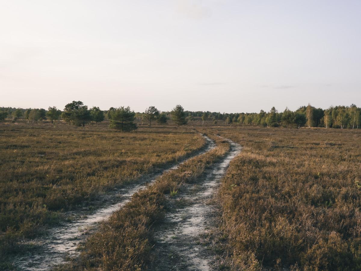 Path into the Osterheide