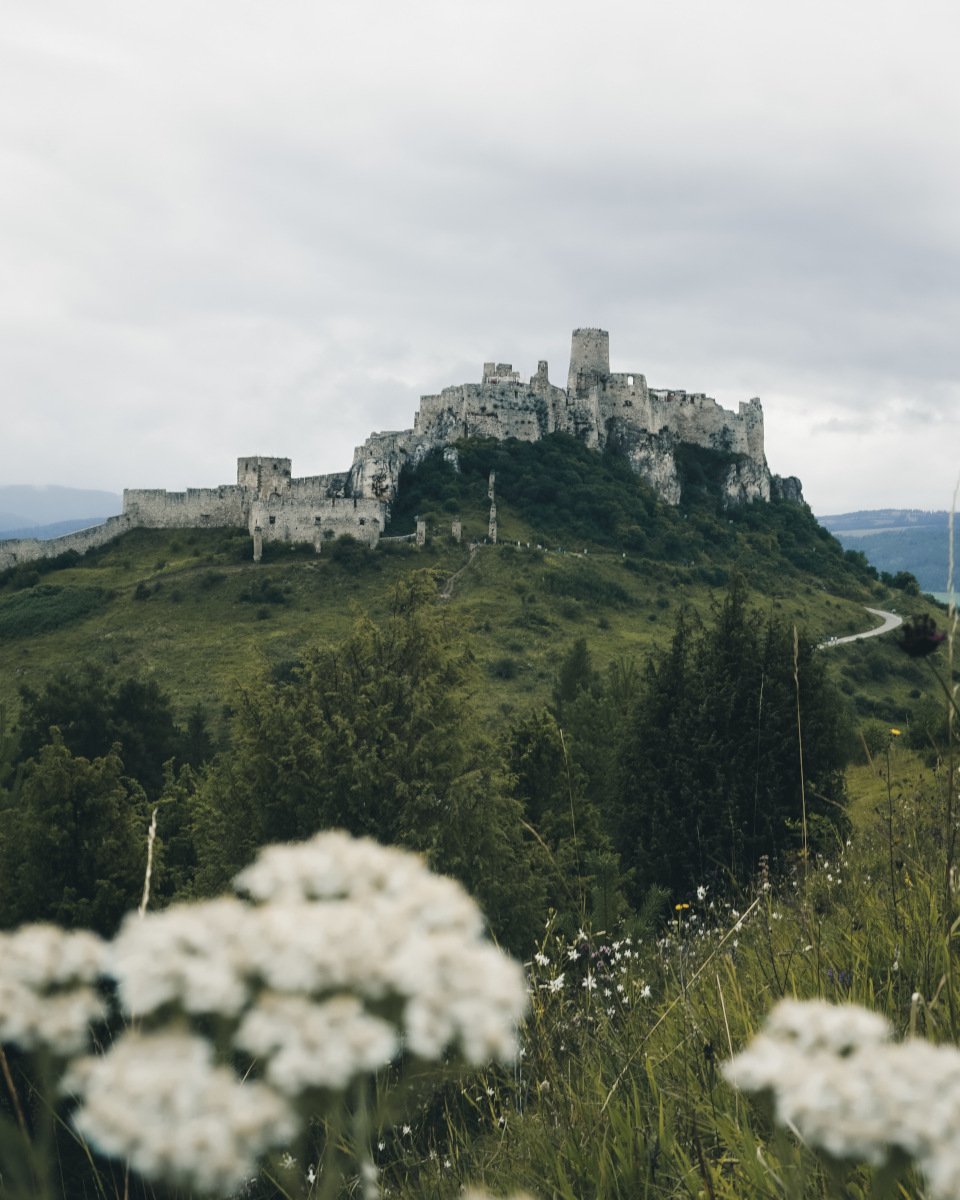 White flowers and the Spis Castle
