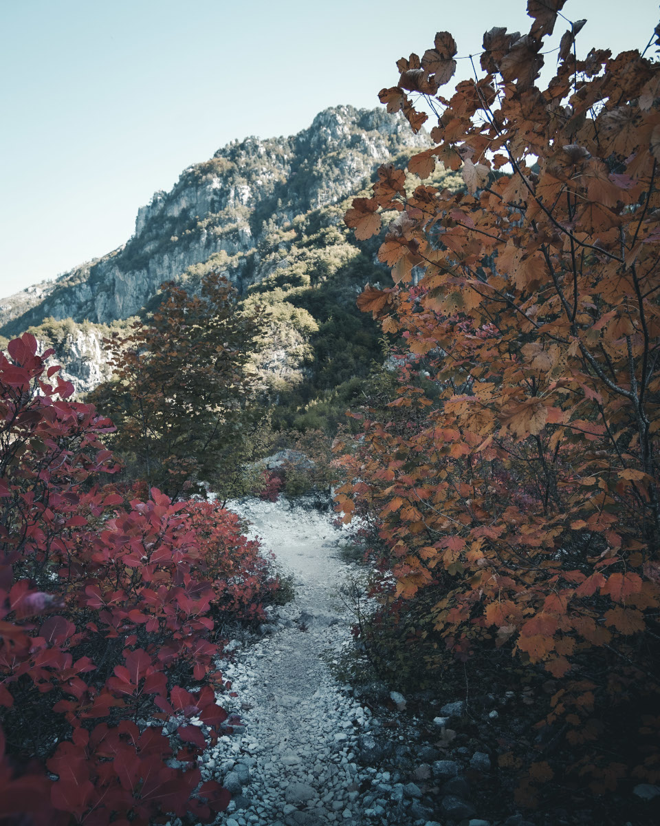 Autumn trees and mountains in Theth