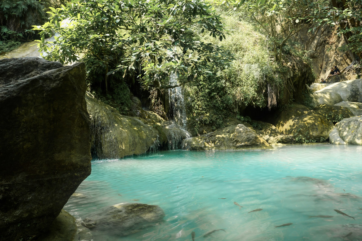 Turquoise pool with fish in the jungle