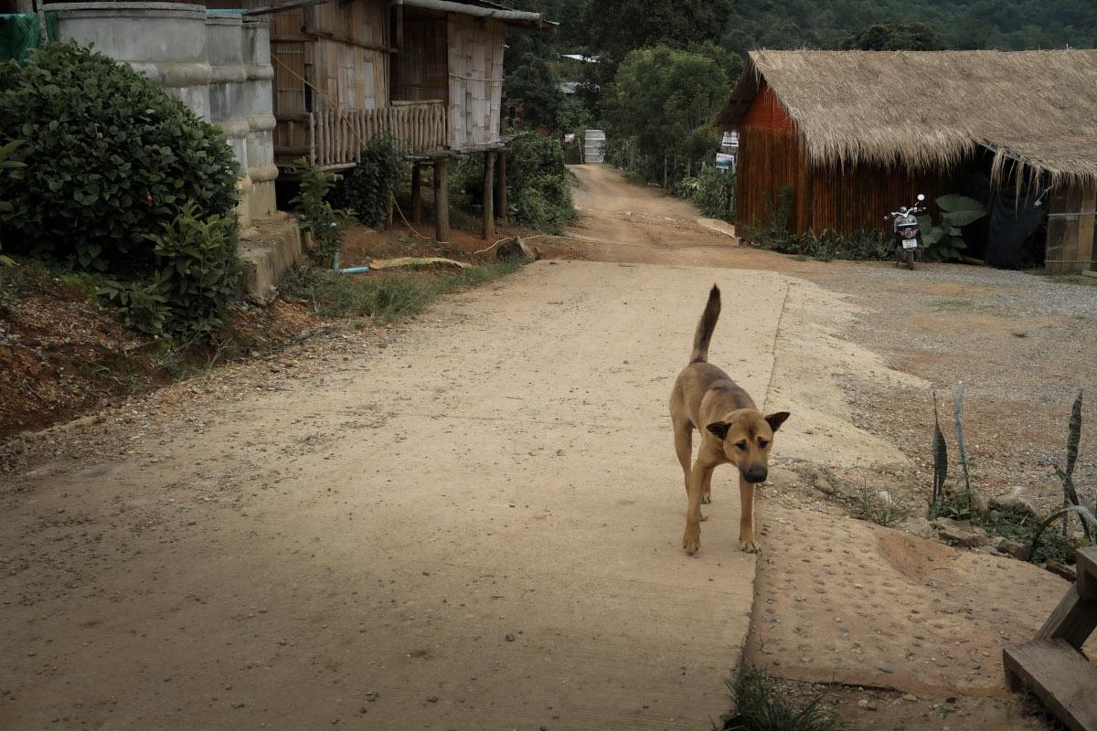 Street dog in Lisu tribe village