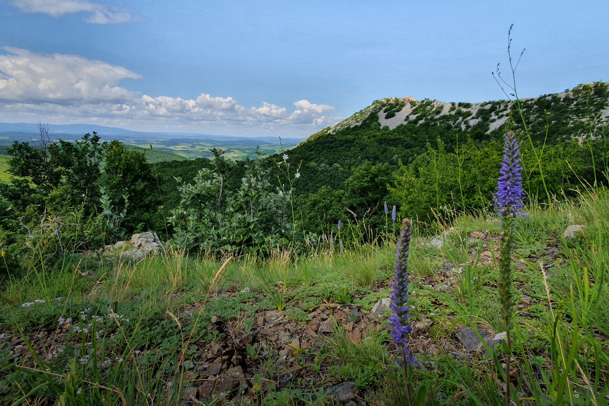 View of the Bükk Mountains with flowers in the foreground